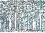 Newtonmore Woods [ pen and ink with watercolour- A4 size, original available ]