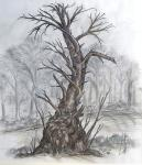 Tree trunk at Lamer Wood [ various pencils on paper ]