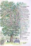 Peter's Poem of the Tree [ This tree in Peter's Garden in Muswell Hill commissioned but given as a curtesy for his services to my art- pen & ink, pencil and watercolour on paper ]